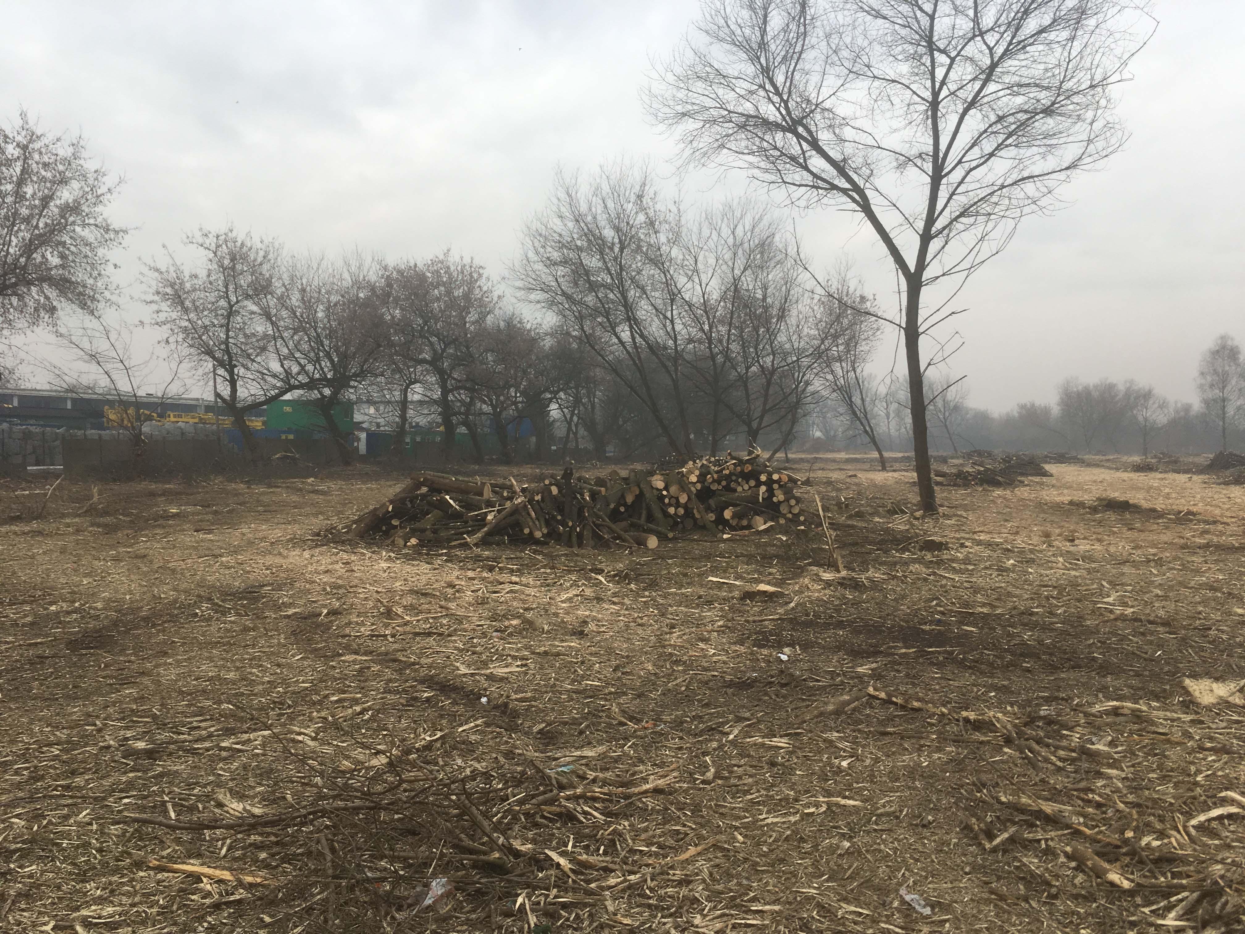 wycinka drzew kraków bochnia wieliczka proszowice gdów okolice