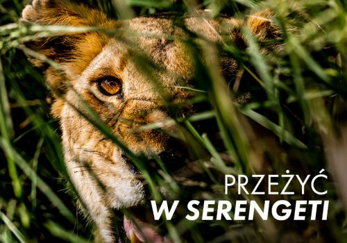 Przeżyć w Serengeti / Surviving the Serengeti (2016) PL.1080p.WEB-DL.x264-nbd / Lektor PL